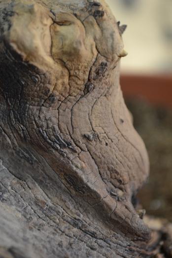 texturas naturales limpiadas cuidaddosamente.