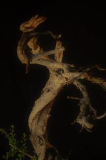 Lo más importante es conseguir una rama muerta de la misma especie (o si no es de la misma especie que las maderas tengan el mismo color).y que los movimientos de éstas sean acorde al del tronco y al diseño deseado.